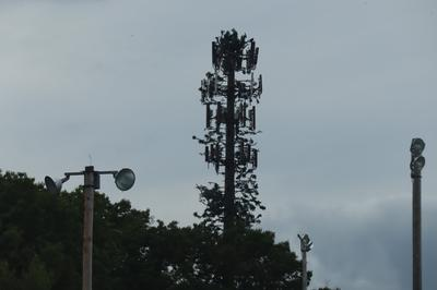 Treepole monopole cell tower