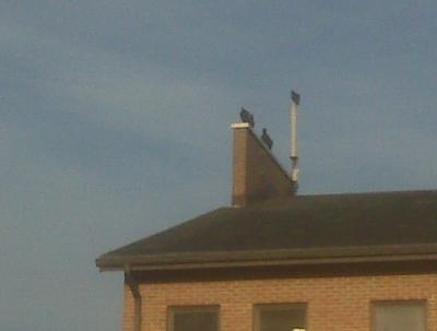 This cell site's for the birds.
